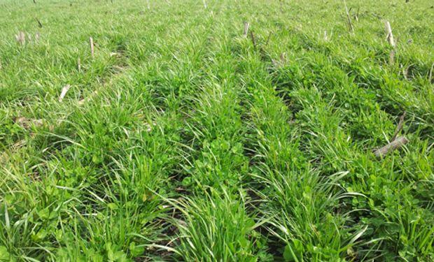Las micotoxinas pueden ser producidas en todas las etapas, desde la semilla al comedero.
