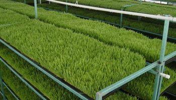 Agricultura destaca uno de los primeros emprendimientos de forraje verde hidropónico del país