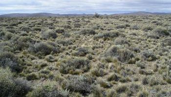 Forrajes: monitorean seis millones de hectáreas