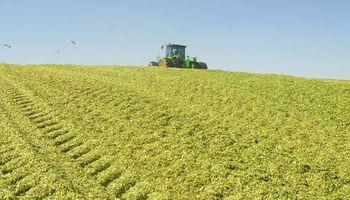 Crece la superficie de cultivos destinados a reservas forrajeras