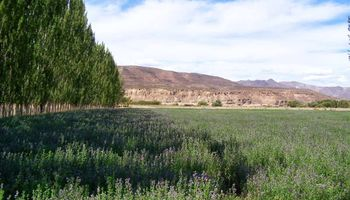 Mendoza, ¿tierra del buen megafardo?
