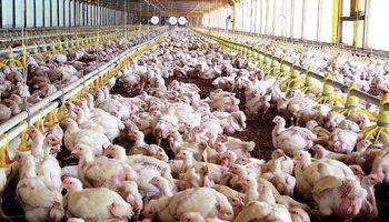 La cadena avícola actualizó los salarios mínimos para todo el país