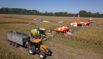 El maíz será protagonista en Franck