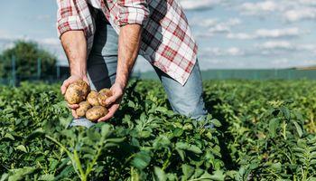 Presentan dos nuevas herramientas para el cultivo de papa