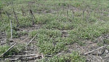La rotación de herbicidas continúa siendo una deuda pendiente