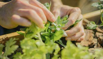 Desde harina de grillos hasta un kit de agricultura urbana: los proyectos ganadores del Agromakers