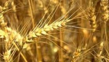 """""""Lo único que sobra en el país es trigo"""""""