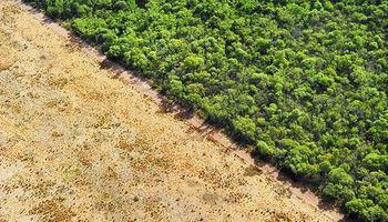 Se perdieron más de un millón de hectáreas de bosques