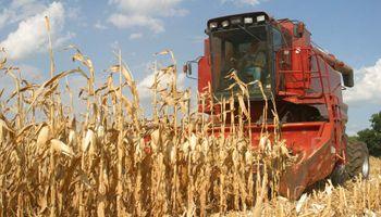 Sudáfrica: Cosecha de maíz sería de 12,28 M. de Tn.