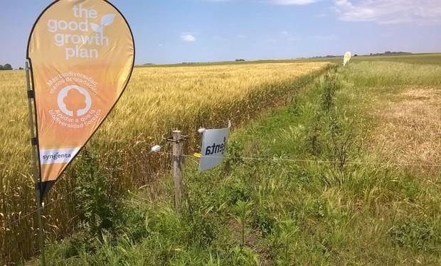 Se desarrolló un protocolo para que los productores puedan implementarlo junto a sus cultivos.