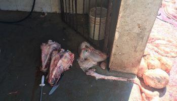 Senasa clausuró un matadero municipal por faltas graves