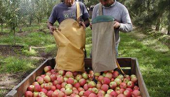 Temen que la fruticultura entre en cesación de pagos por la crisis