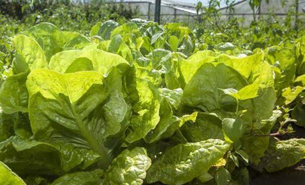 El Senasa controla la inocuidad de las frutas y hortalizas.