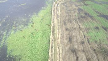Uruguay no fue la excepción: lluvias afectan cultivos de invierno