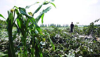Grave: nuevo récord de participación del Estado en la renta agrícola
