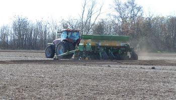 En qué condiciones arranca el trigo en la región pampeana