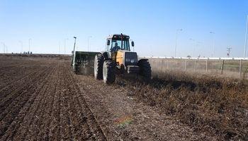 El trigo tiene fecha para la gran largada de una siembra récord