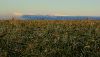 La tensión en Crimea impulsa a la suba el precio del trigo