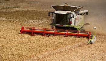 Caería la cosecha mundial de trigo