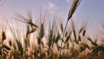 Buenos Aires: declaran emergencia agropecuaria por sequía
