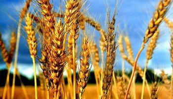 Quejas por los descuentos en el precio del trigo en plena cosecha