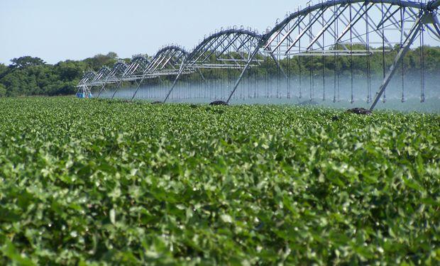 El riego se sumó para estabilizar rendimientos y mejorar la producción