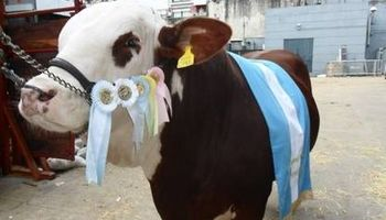 Pagaron $ 670.000 por una vaca