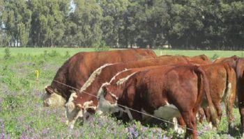 Aseguran que la ganadería regenerativa es parte de la solución para limitar el cambio climático
