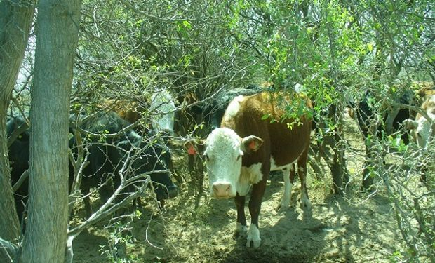 Aseguran que un buen manejo ganadero reduce hasta un 30 % las emisiones de gases de efecto invernadero
