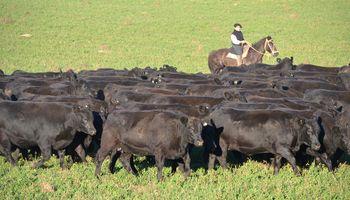 Los W: la sociedad histórica que compró DirecTV y ahora quiere invertir $330 millones en ganadería