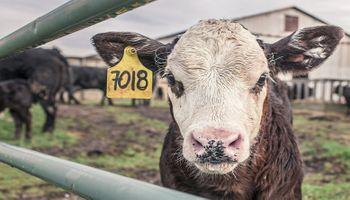 ¿Qué está pasando con el mercado de carnes en el mundo?