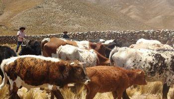 Las vacas ganan terreno en los valles de altura