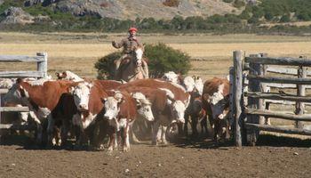 Patagonia libre de aftosa sin vacunas