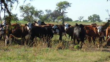 Santiago del Estero: una medida que impacta sobre la actividad agropecuaria