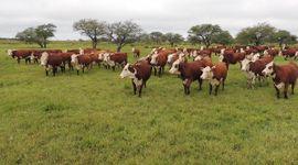 Santa Fe: productores ganaderos podrán participar por financiamiento de hasta 15 mil dólares