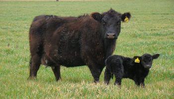 Cuál será el rol de la ganadería en la postpandemia