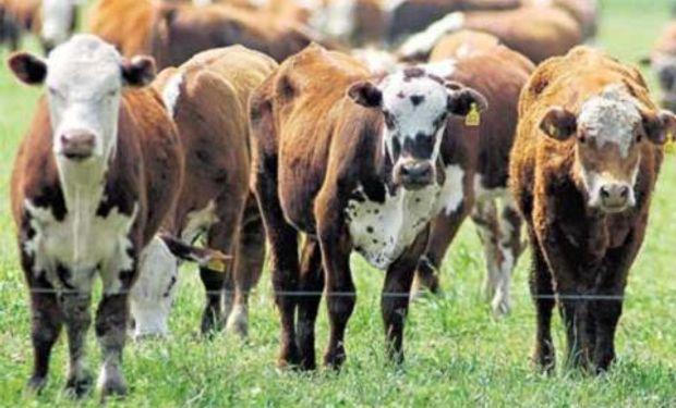 Los costos destruyen la rentabilidad del ganadero