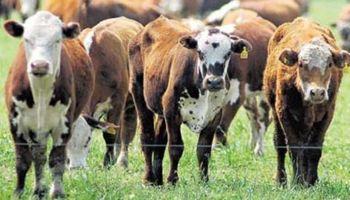 China cambia el mercado de carne