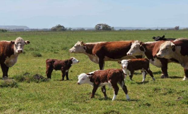 Inversores cordobeses explotarán ganadería y horticultura en el centro oeste formoseño