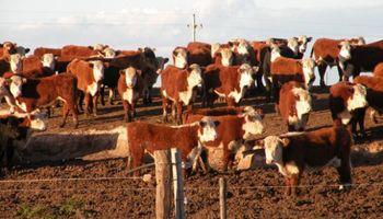 Uruguay: venta de ganado a futuro da certezas al productor