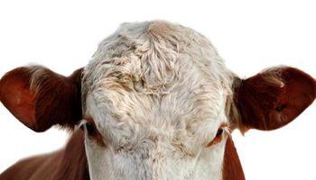 Brasil suspendió exportaciones de carne a China por la vaca loca