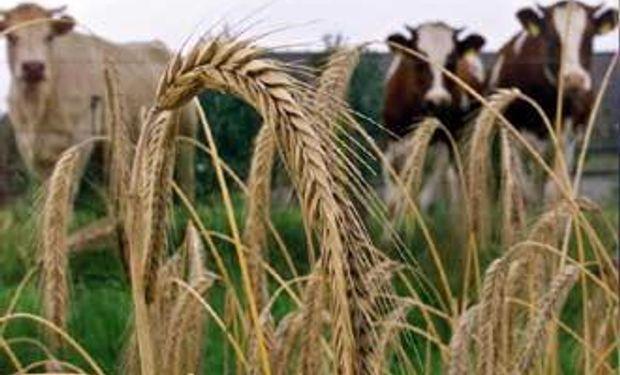 Crece la región como productora de alimentos