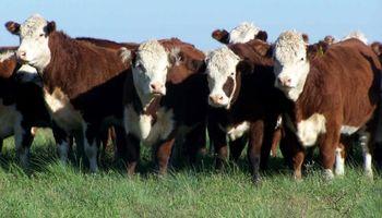 El ABC para que la ganadería argentina despegue