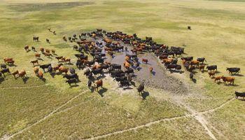 Qué lento que va la cosa para la ganadería