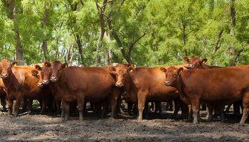 Censo Agropecuario: las razones detrás de la desaparición de 63.083 establecimientos ganaderos