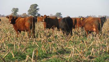 Cómo distorsionó a los márgenes de la ganadería el cepo al dólar y el coronavirus
