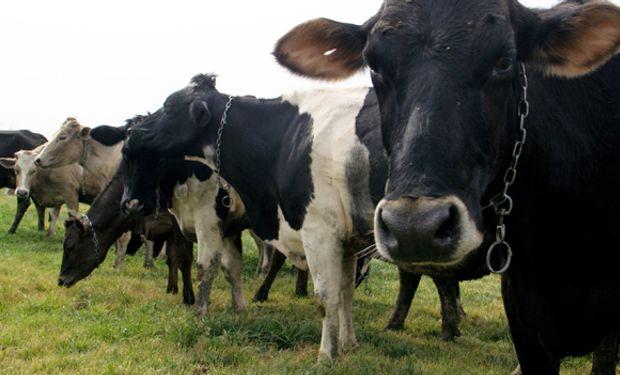 Tal vez la única excepción relativa sea la ganadería.