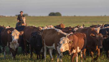 """Milano sobre la tendencia de los precios de la ganadería: """"Obligan a nuestros productores a invertir en lo que saben"""""""