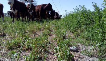 Producción de carne bajo riego, una oportunidad de desarrollo