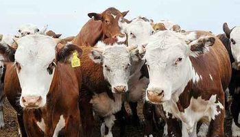 Fuerte apuesta por la ganadería en Cuyo